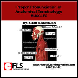 Proper Pronunciation of Anatomical Terminology: Muscles Image